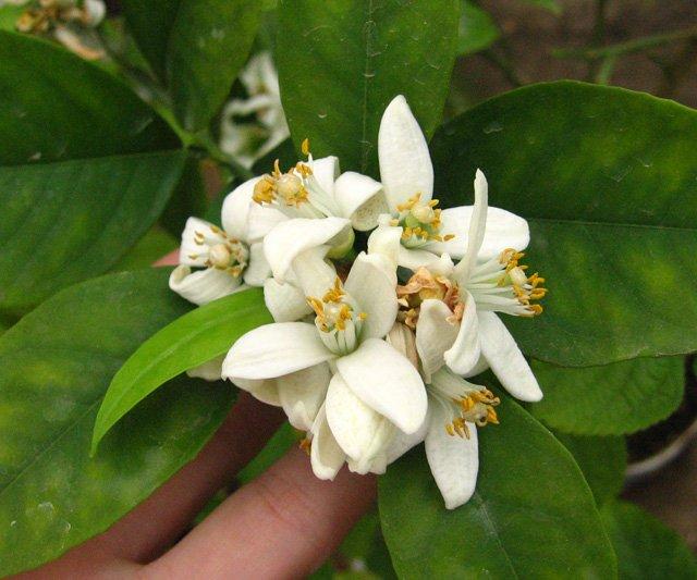 Растения из Нижегородской оранжереи Af0c9c897e16