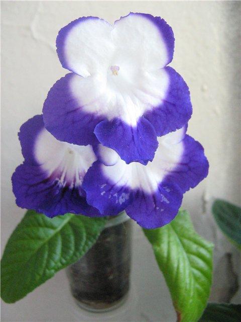 Моё цветочное богатство - Страница 21 E1d07ec9f83f