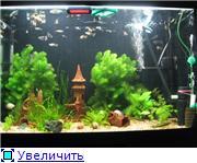Мой аквариум 01ad9f80d3b3t