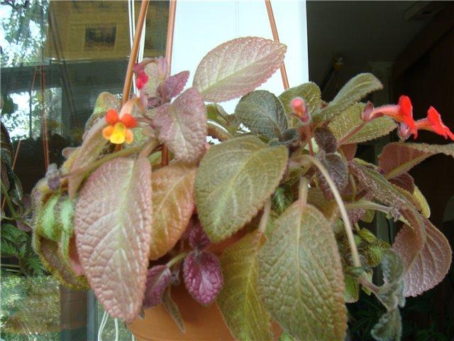 Весеннее  цветение (Хваст от Веры) - Страница 8 7ecd9f1383d1