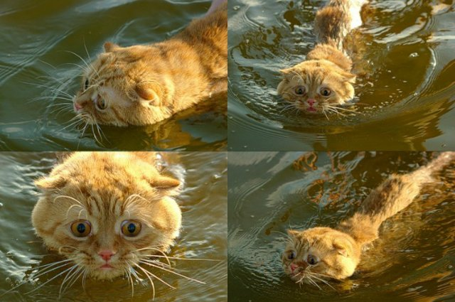 Коты, кошки, котята и все что с ними связано - Страница 5 99d8396c8689