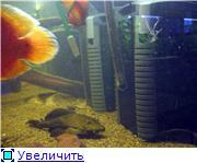 Внешники внутри аквариума 22fb2f1f0904t