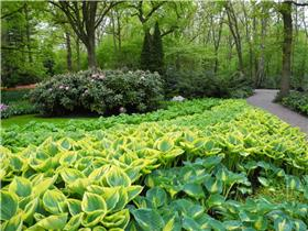 Рай тюльпанов или Кёкнхов - 2012 40e96b583d21t