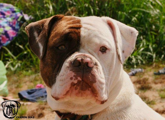 Собаки питомника Carpen Diaz - Страница 2 810e81df9db5