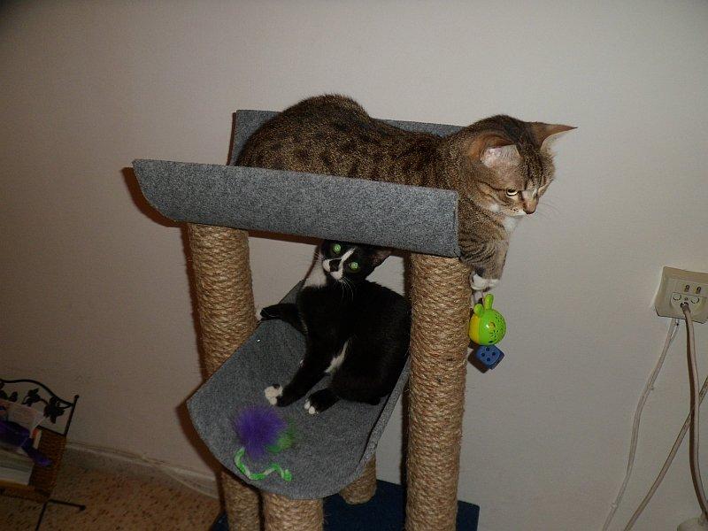 Коты, кошки, котята и все что с ними связано - Страница 64 0643056d5bba