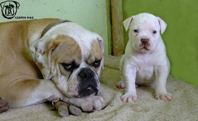 Собаки питомника Carpen Diaz - Страница 2 2a91339d48e2