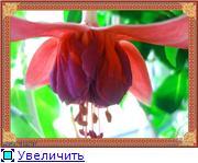 ФУКСИИ В ХАБАРОВСКЕ  41fbd2784037t