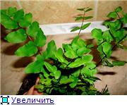 ФУКСИИ В ХАБАРОВСКЕ  - Страница 11 7c08b0011b77t