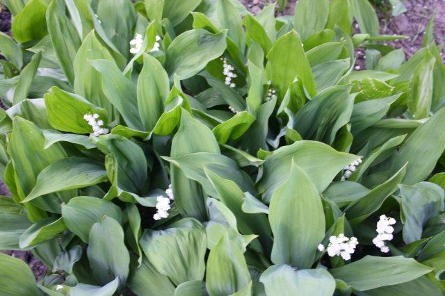 Растения от FILIGERa - Страница 2 82350be54419