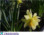 Весна идет, весне дорогу! - Страница 8 C72fa04d3b14t