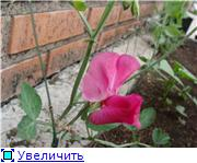 Лето в наших садах Cebb700e920ct