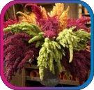 продам семена экзотических растений - Страница 3 E131efefa8cb