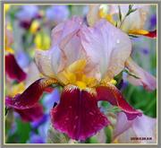 Совместное творение цветов из лент - Страница 2 Fcf95cca0521t