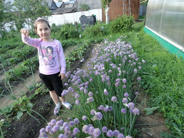 Ландшафтный дизайн... Сделаем свой сад самым красивым! Cf126b194aba