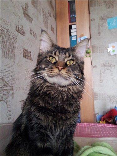 Каталог вяжущих котов 0c62a959c639