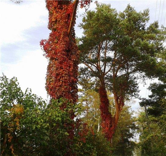 Осень, осень ... как ты хороша...( наше фотонастроение) - Страница 4 Bbc883f5cbd7
