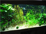 Мои последние аквариумы - Страница 2 26864ee89d65t