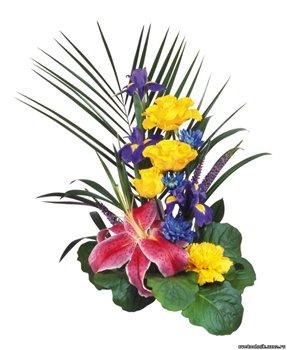 Поздравляем с Днем Рождения Юлию (coon) 24c764a16edbt