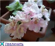 Рыськино СЧАСТЬЕ 09b2c286e443t