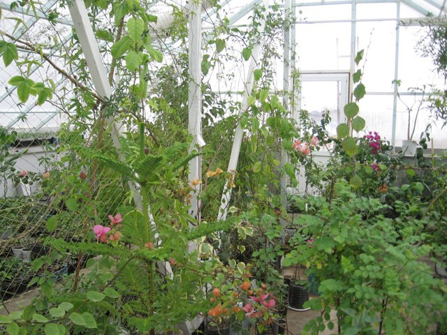 Растения из Нижегородской оранжереи F5229e17bf24
