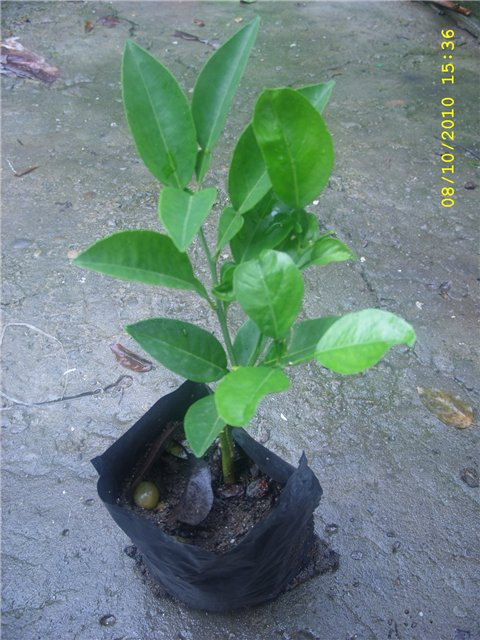 Растения из Сочинского питомника - Страница 3 B7d5ad489da2