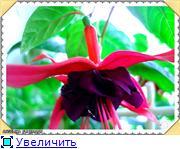 ФУКСИИ В ХАБАРОВСКЕ  672c82853210t