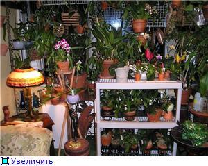 Размещение орхидей 67b8194720d7t