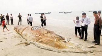 В Китае из моря вытащили монстра-гиганта 895bd228af70