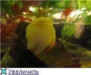 Черный-Акватер с красноухой 7c33159abdc1t