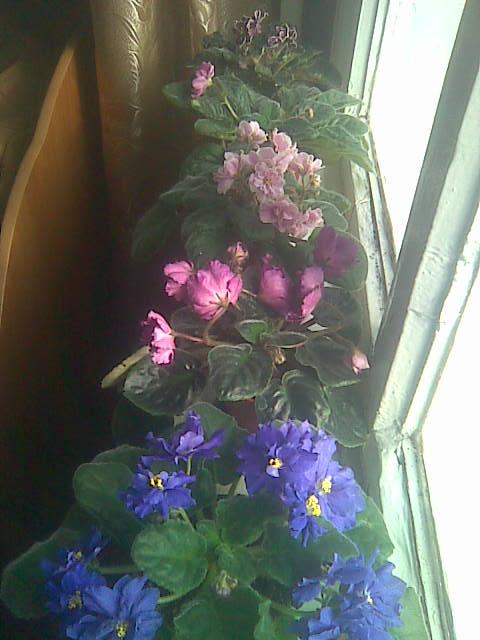 Цветочки Галина77 - Страница 8 Aad423f65510