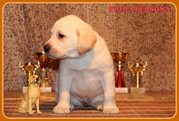 "Питомник ""Прима Персона"". Мои собаки-моя жизнь! 039ae3864ee4"