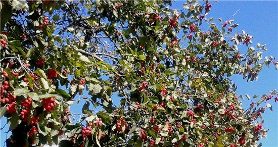 Осень, осень ... как ты хороша...( наше фотонастроение) - Страница 5 69fd621f8b69