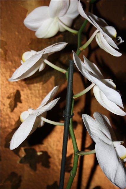 Растения от FILIGERa - Страница 3 9b594a571aec