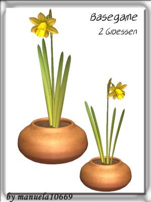 Цветы для дома 499dda69d08b