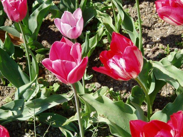 Крым. Никитский ботанический сад. 4a9ce58bd9b2