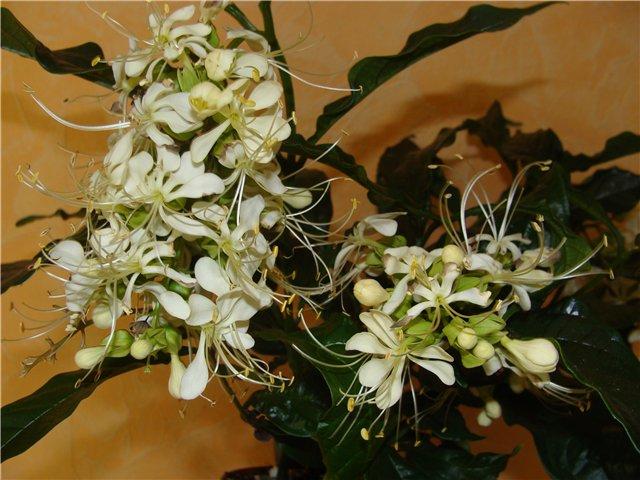 Весеннее  цветение (Хваст от Веры) - Страница 6 2b575546205d
