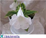 Каталог глоксиний E5fe27235564t