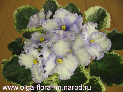 Lavender Swirls (S.Sorano)  34f003c67d95