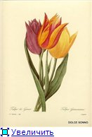 Цветы, букеты 47dee226e86bt