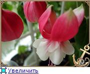 ФУКСИИ В ХАБАРОВСКЕ  - Страница 3 6f0e135165a6t