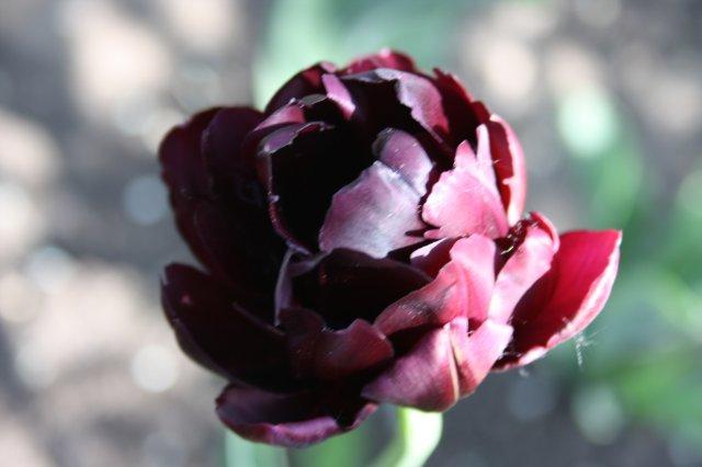 Растения от FILIGERa - Страница 2 A268ddff6c3e