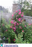 Лето в наших садах - Страница 2 3956ff9541cet