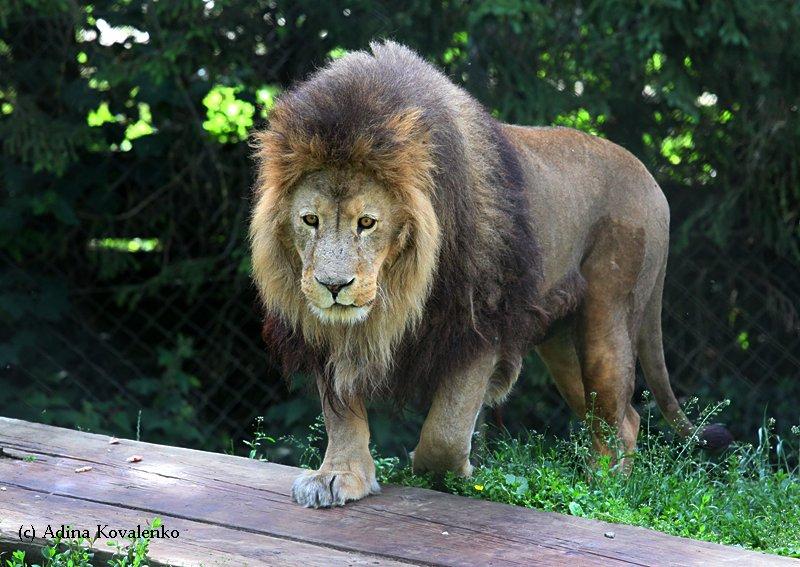 Швейцарский зоопарк 10e5518c1815