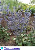 Лето в наших садах - Страница 7 6c7d2e608b27t