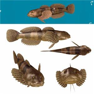 Все для аквариумов, водоемов - Страница 4 F3ded797da4e