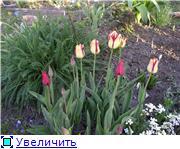 Весна идет, весне дорогу! - Страница 8 Ba8be8d7a801t