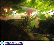 Черный-Акватер с красноухой 655be44a8495t