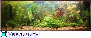 Питание аквариумных растений. - Страница 2 B2cfbe5b2c20t