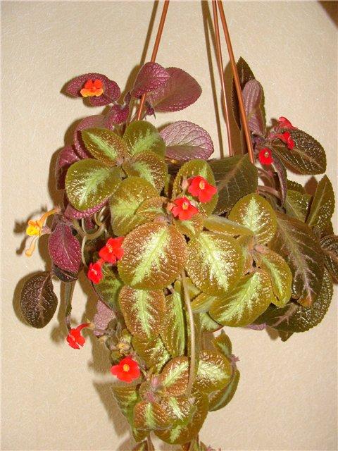 Весеннее  цветение (Хваст от Веры) - Страница 8 629847ff31a1