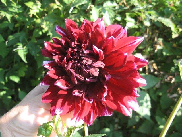 Во саду ли, в огороде... - Страница 6 133056df3e47